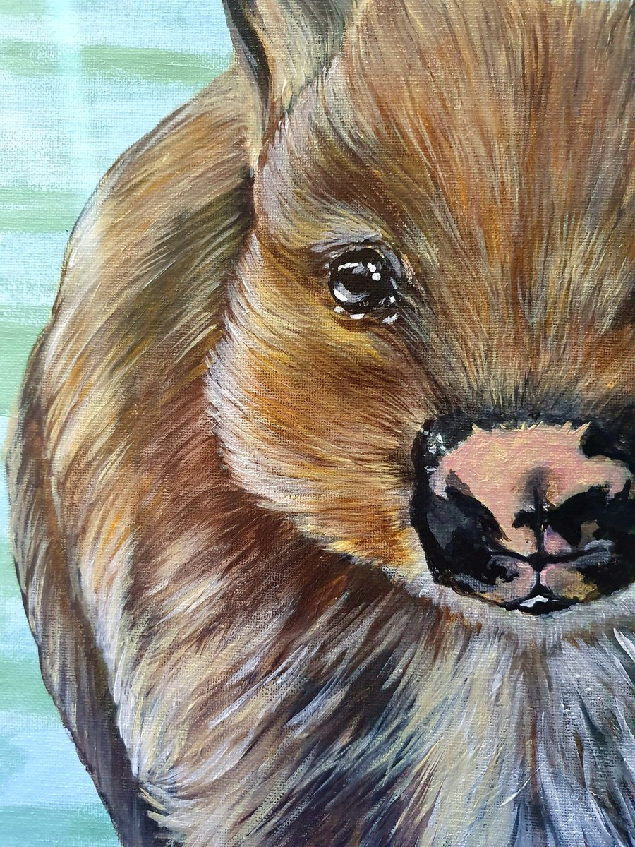 Wally in progress still   #art #adelaide #southaustralia #australia #postcode5158 #canvas #wildlifeart #australian #native #wombat #artislife #hallettcovebeach #supportlocal #adelaideartist #southaustralianartist https://t.co/iPRNQsGxFF