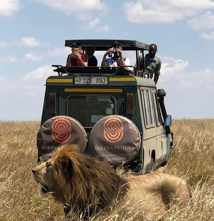 Where else do you get a one on one time with the king of the jungle than at the Serengeti.  Spectacular game drives in the Serengeti are a must; book your safari with Serena Lodges today for an unforgettable experience https://t.co/6M2wW17EeF