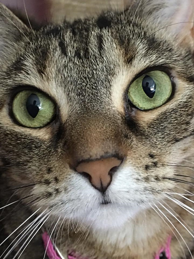 #Caturday: #Face #Faces #CuteFaces #Cat #Cats #TabbyCat - Photo by https://t.co/hCOBoMTsri.model https://t.co/nDoEa0yCOv