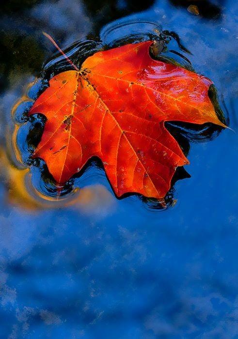 Quando piove, in autunno, ogni goccia porta con sé un ricordo, e i ricordi, come la pioggia, non si possono fermare. #buongiornoatutti #26settembre #poetry #Autunno https://t.co/Ol6WbKSv67