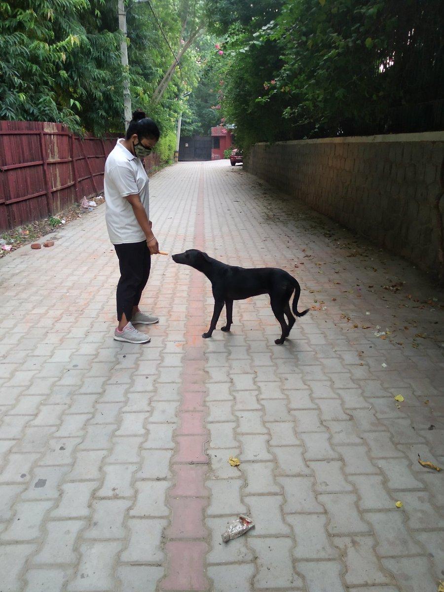 @the_oscar_fdn @Anushka2620 @jatinsinghsond @mishtu2714  @pfaindia  @PetaIndia #dog #love #feed #theoscarfdn #we #feed #everyday #pfa #indian #daily #routine #peta #behuman #choose #kindness #love #serve #them #animalslivesmatter #dost #stop #cruelty https://t.co/7u7leQ59Eg