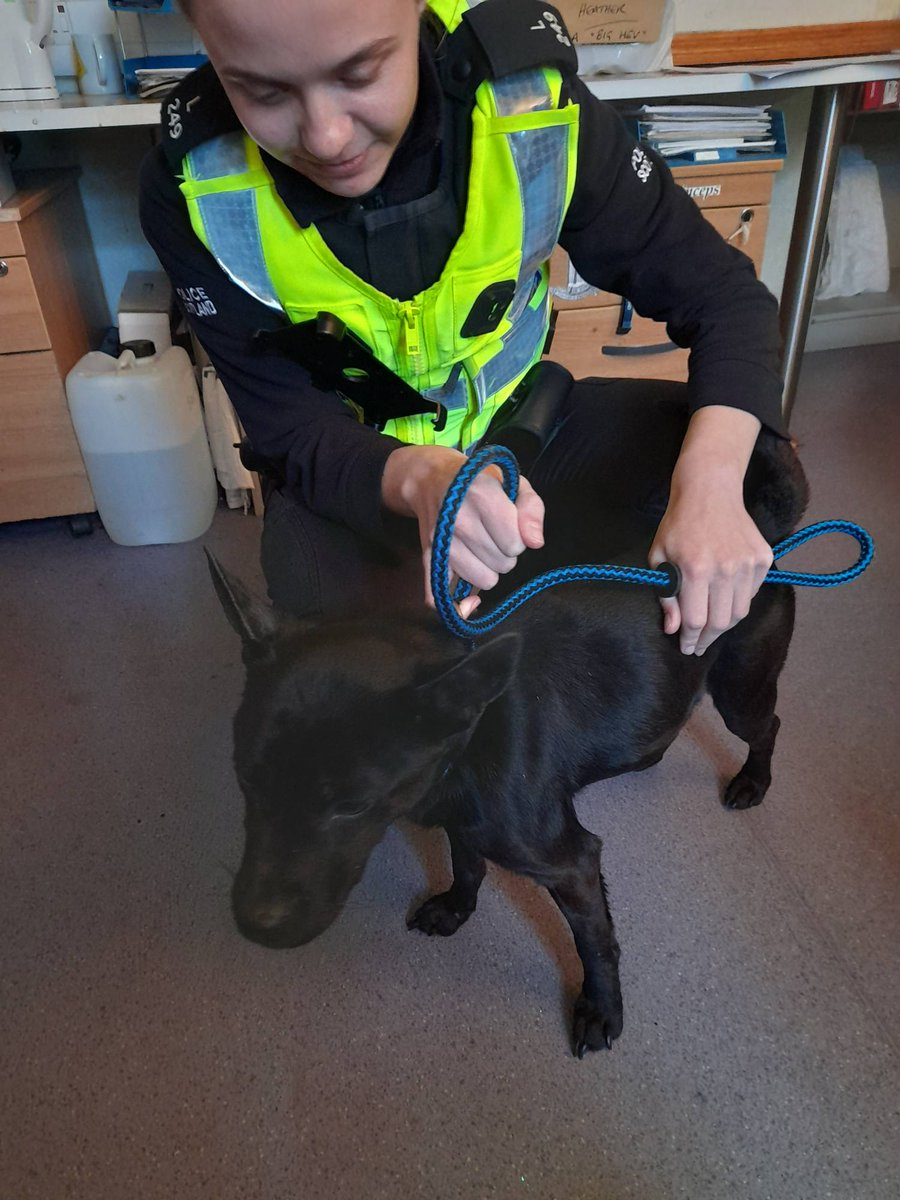 Do you recognise this dog. This female dog was found yesterday and brought to office today. She was found running around the road at Ardgartan Visitors Centre, near Arrochar. We would like to get her home. Please ring 101 and ask for Lochgilphead Police station.