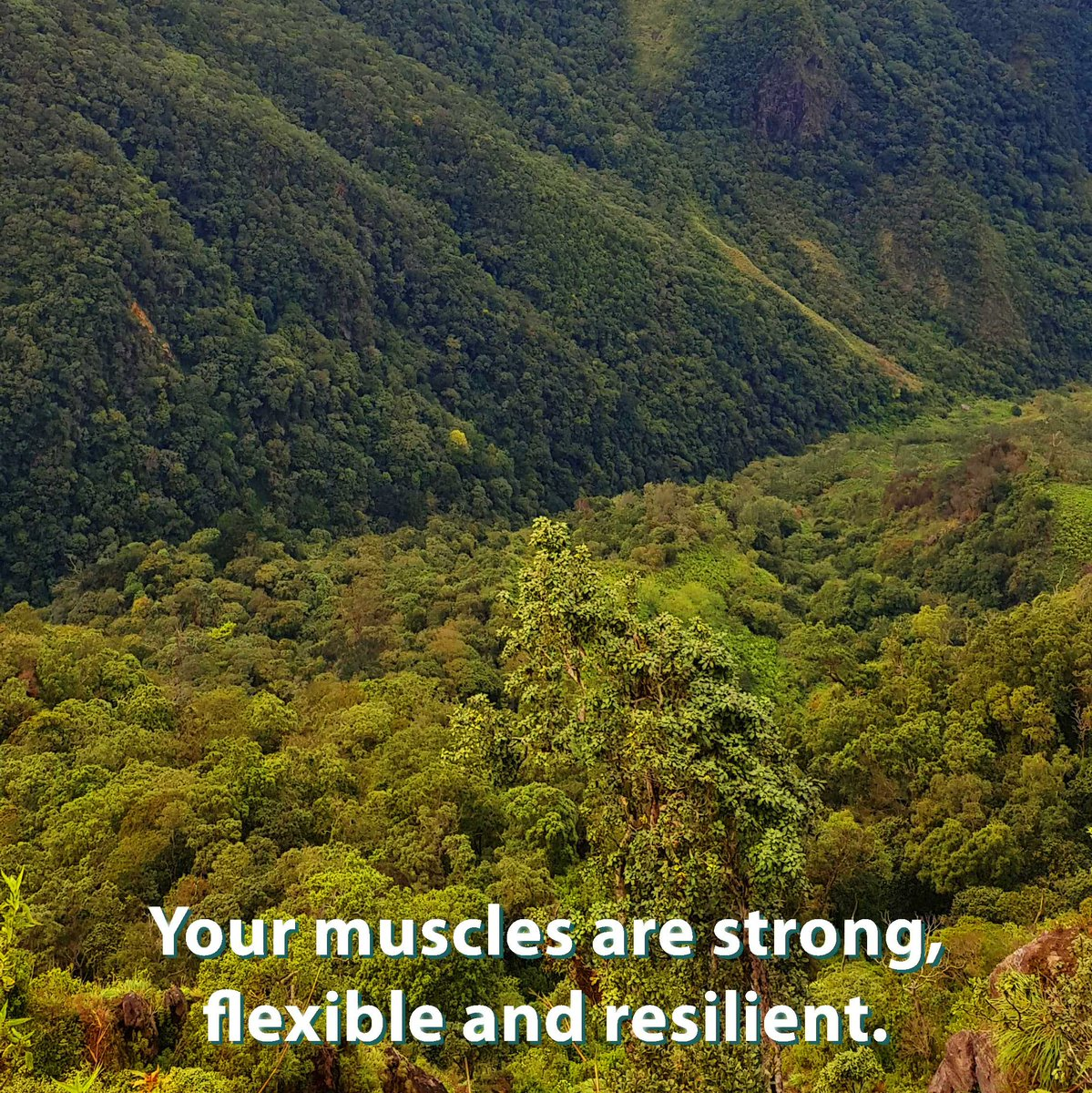 Your muscles are strong and resilient.  🌲Follow for daily affirmation photos and more🌲 🌲@leaftreeaffirmations🌲  #leaftree #leaftreeaffirmations #photo_forest_gold #treehugger #lonely_tree_love #treelover #naturediversity #writersofinstagram #positivethoughts https://t.co/nb7JJxE1nJ