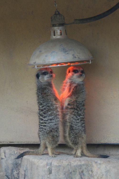 圍在熱光燈下取暖 Ei1iXVrWAAE1K6B
