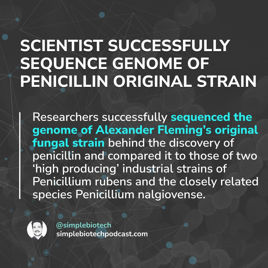 Scientist Successfully Sequence Genome Of Penicillin Original Strain  #researcher #researchers  #geneticengineering #Fungus #Penicillin #scientist #scientists #genome #genomics  #sciencecommunication #sciencepodcast #molecularbiology #cellbiology #dnasequencing #sequencing https://t.co/7VfS0Ply7K