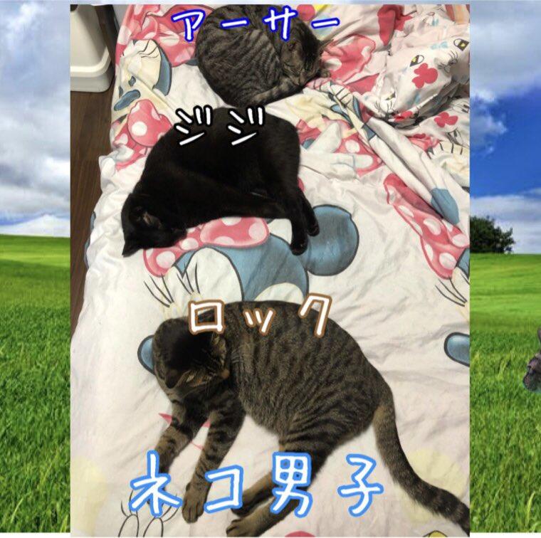 珍しく男子が揃ってます 仲良くはないのに・・・w #ネコ #猫 #猫バカ #ねこらぶ #ねこと暮らす #ねこすたぐらむ #ネコ好きさんと繋がりたい #ねこ動画 #猫写真 #ネコバカ #ネコ好き #保護ネコ #仔猫 #サバトラ #キジトラ #黒猫 #キジ猫 #サビ猫 #白トラ #三毛猫 #ボーカロイド #VOCALOID https://t.co/BfUHELL7be