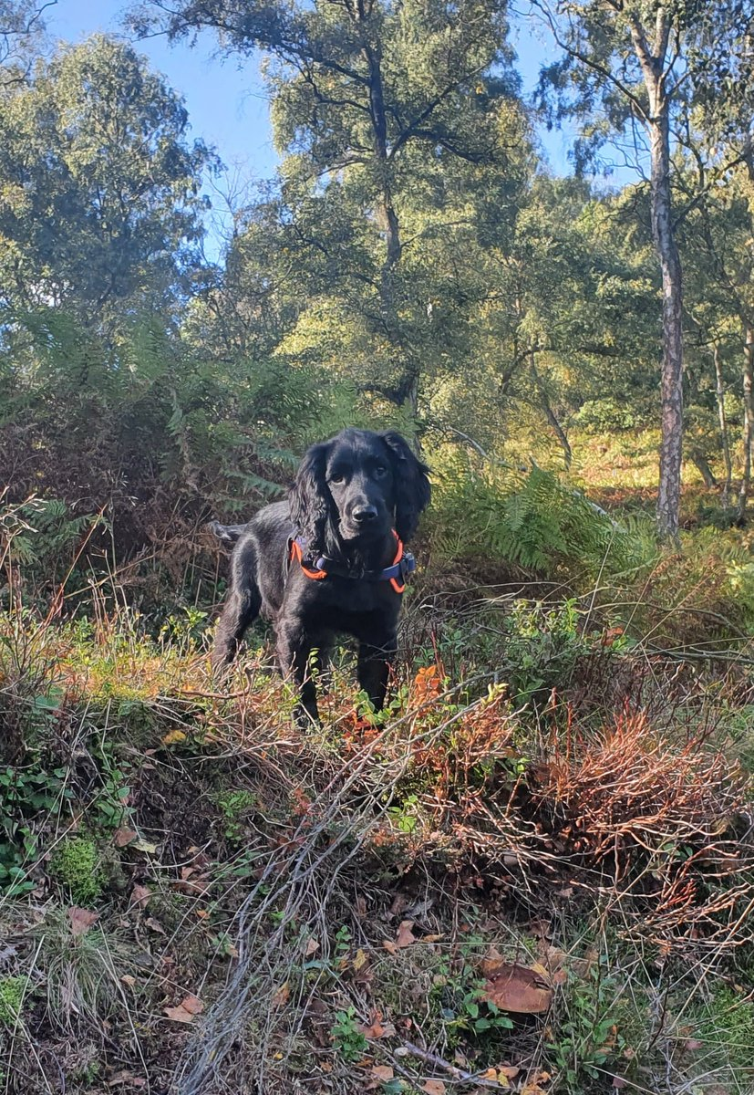 Who loves #CannockChase more than me? 🐶🥰  #SaturdayMorning #morningmotivation https://t.co/5FFM0w8Xpe