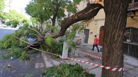 Forte vento su Palermo, alberi e pali della luce su strada e ancora incendi - https://t.co/093hZi7CtJ #blogsicilianotizie