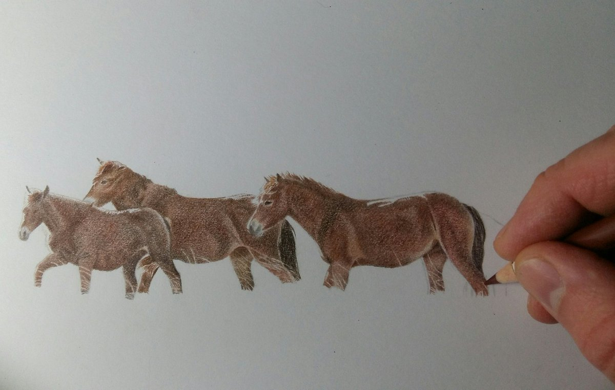 Exmoor pony drawing coming along. Three more ponies then a bit of the moorland undergrowth.  #exmoorponies #exmoornationalpark #ponies #drawingoftheday #animals #equineart https://t.co/rs24vPnuor