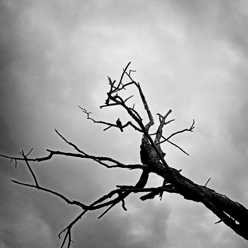#exploringdelhi #Through_Priyas_Lens #minimalism . A branch, a bird, and a cloudy sky... three elements and minimalism. Earlier today, at Hauz Khas Deer Park, in Delhi...  #Delhi #blackandwhitephotography #blackandwhite #minimalist  #indianphotography  #mobilephotography https://t.co/nspoMqPbeX