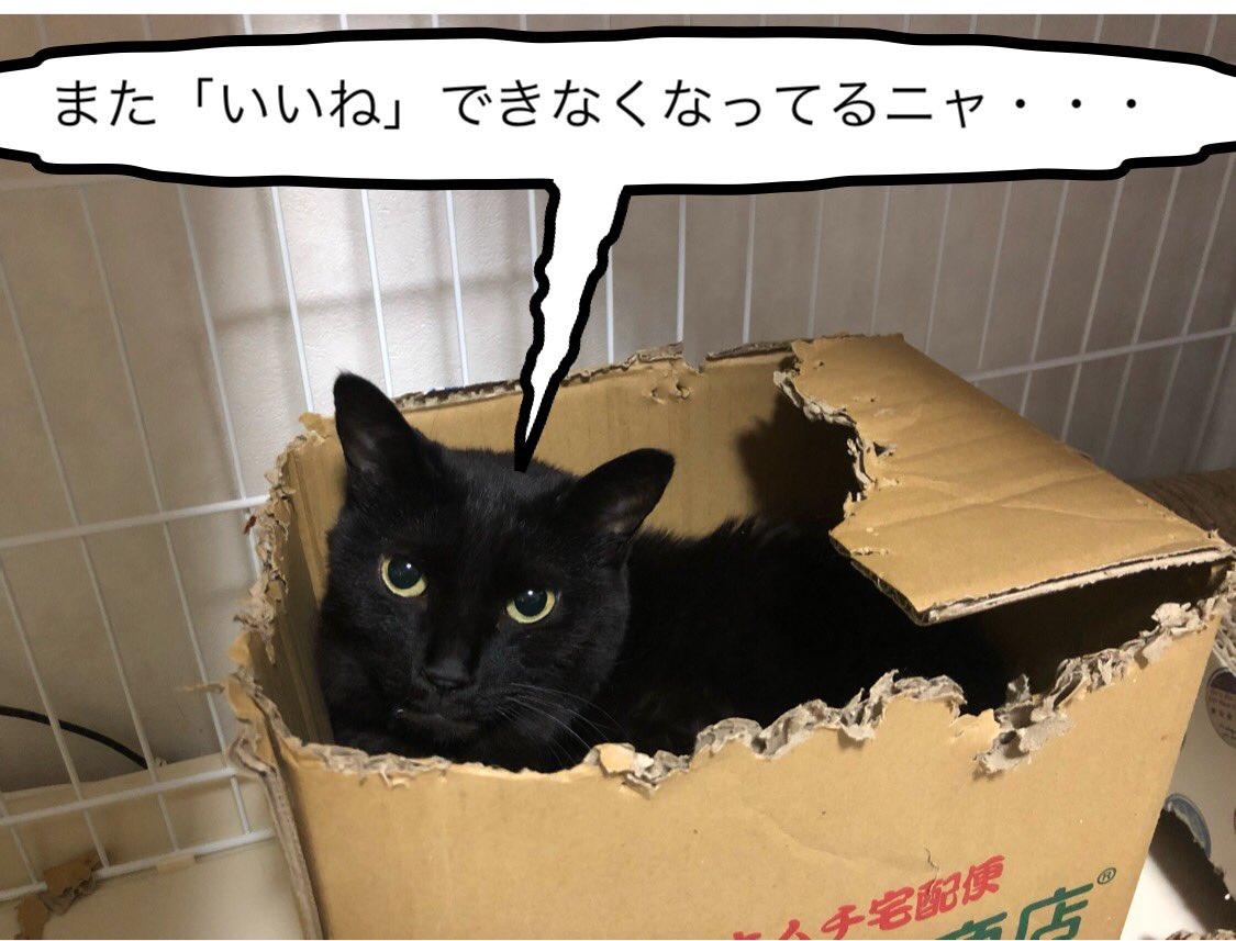 たくさん「いいね」したいのに・・・ #ネコ #猫 #猫バカ #ねこらぶ #ねこと暮らす #ねこすたぐらむ #ネコ好きさんと繋がりたい #ねこ動画 #猫写真 #ネコバカ #ネコ好き #保護ネコ #仔猫 #サバトラ #キジトラ #黒猫 #キジ猫 #サビ猫 #白トラ #三毛猫 #ボーカロイド #VOCALOID #オリジナル曲 https://t.co/FsERn6oJgA