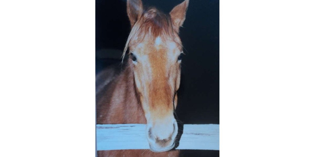 """New """"Animals Are Soul"""" blog article. """"The Horse Who Trusted,"""" by Paula Flint, West Virginia https://t.co/WcmKuSFLN3 #AnimalsAreSoul #HorseLovers #PetLovers https://t.co/c30EU8dg3v"""