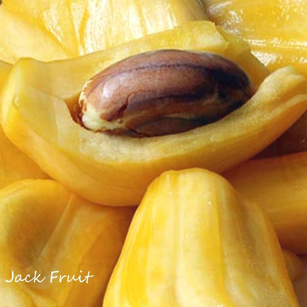 *TRY SOME JACKFRUIT* #jackfruit YACA.  #vegan #plantbased #veggie #meatless #groceries #veggieshop #veggiegroceries #veggiemarket #metromercados INSTAGRAM https://t.co/URh2WRQRUg WHATSAPP https://t.co/K52axuiBxV VISITA NUESTRO SITIO WEB https://t.co/rDzFkpKiZ2 https://t.co/gy2P0QNT5j