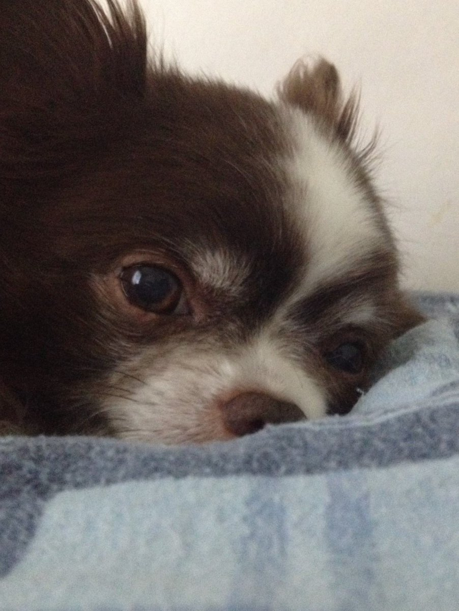 #RIP_Grizz Grizz is fatigued after the long search and needs a #MountainDew! He found the blog 13 4-letter words that end in -INK. https://t.co/rXQjlAu48m. #TyposHurtYourWriting https://t.co/LxmIovbXDW