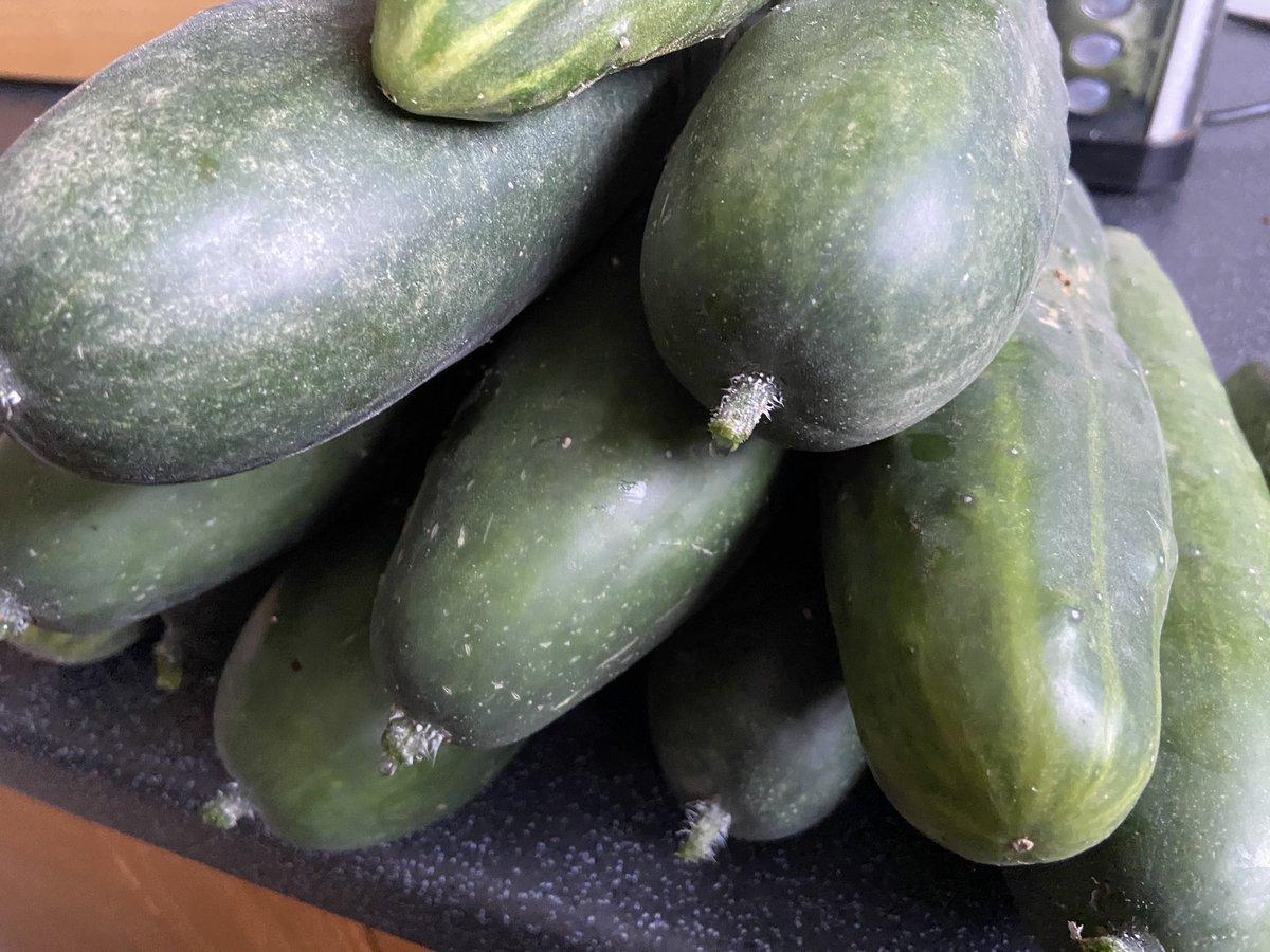 @Garfieldthechef @_joshuamorris @eldiningroomi @AldiUK Ended up 12 once we had a good look #cucumbers 🥒 https://t.co/YXXRCo9RAz