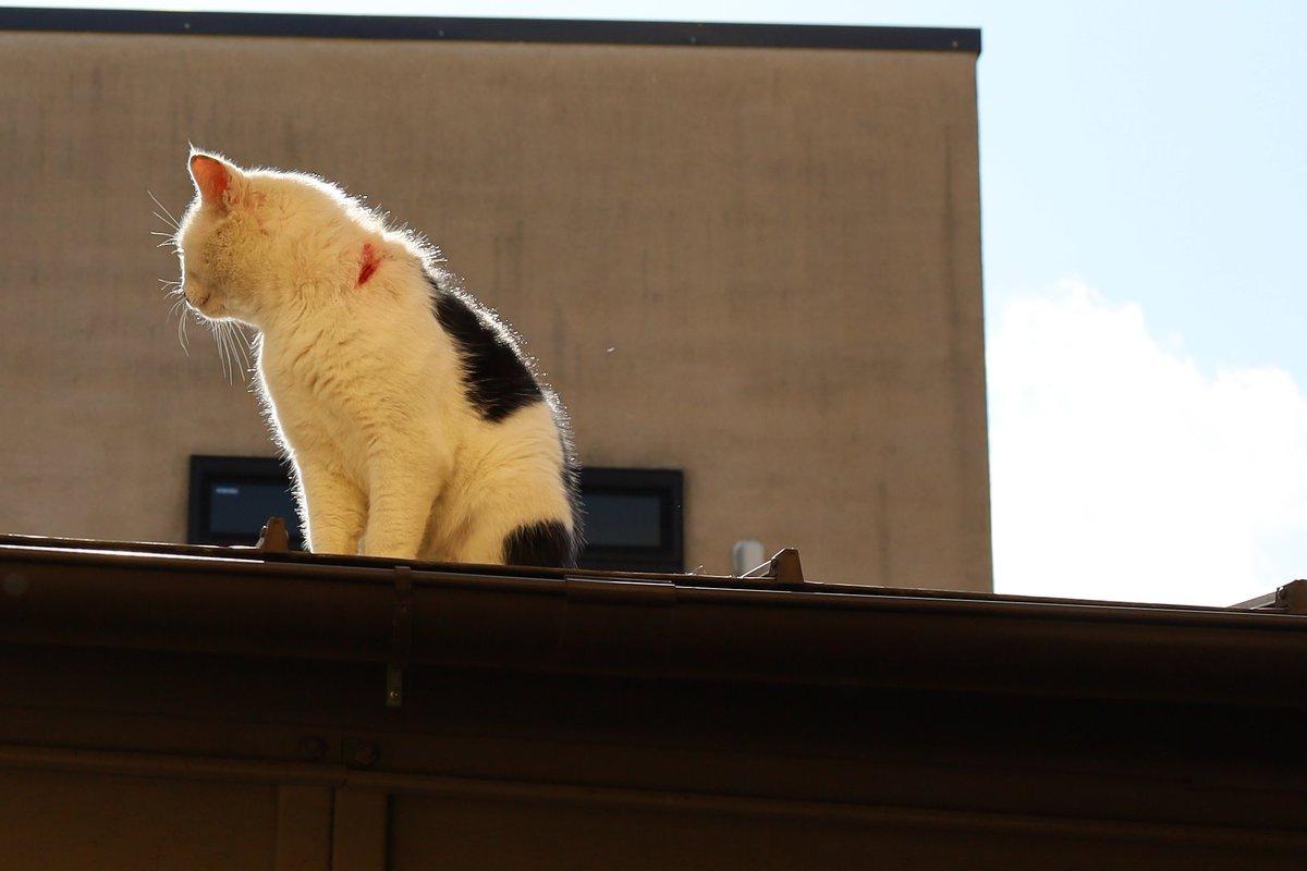 前にいた白黒ねこ #猫写真 https://t.co/DuyY07fEUF