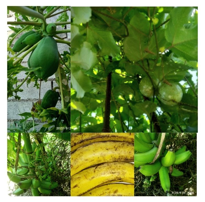 @YobaniQuintero #ElRetoDeYobani Día 26. Ricas frutas. Decidí hacer un college con fotos de las frutas que tengo en casa, verdes y maduras... Pero ricas frutas! #Parchita #Lechoza #Cambur #Guineo #Platano https://t.co/up35UQqwy5