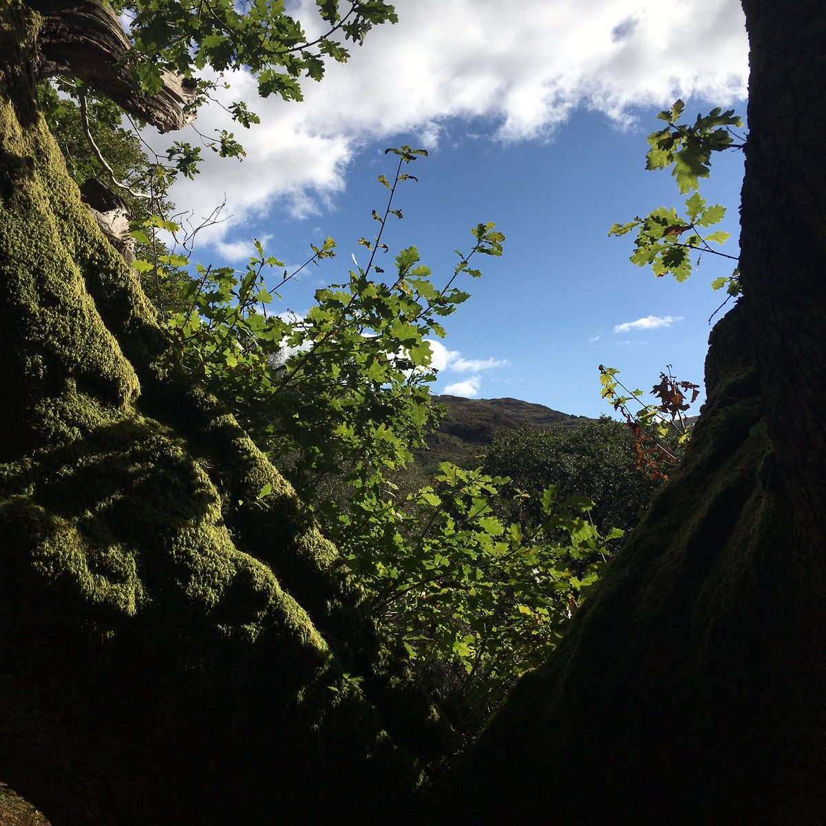 Trees - I love them - here's some great examples of them in Glen Trool #picoftheday #Scotland #bonnie #treehugger #sunnyday https://t.co/qdfvlJ95au