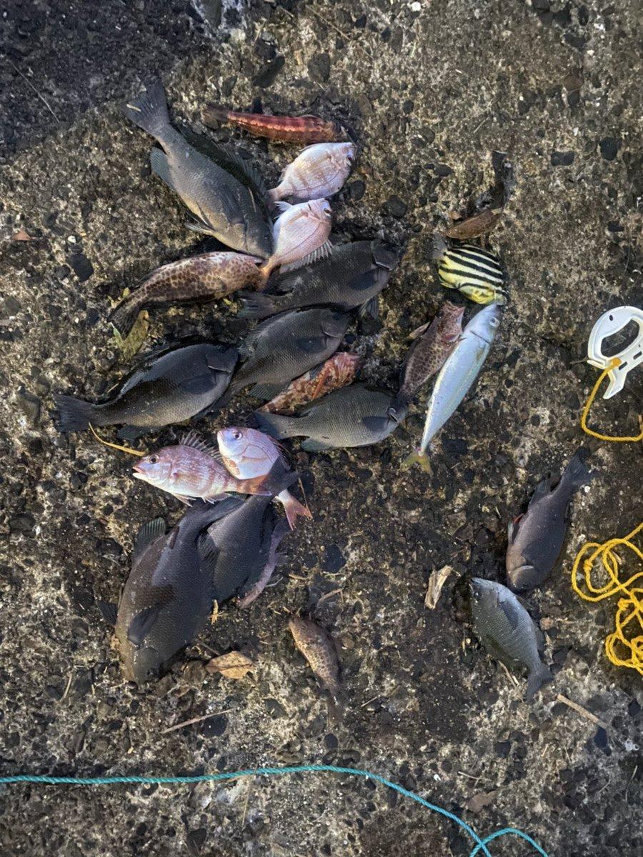 今日はあきませんでした😅 #釣り #海釣り #堤防釣り #波止釣り #フカセ釣り #フィッシング #fishing #釣り好き #三重県 #釣行 #釣果 #グレ #サバ #オオモンハタ #ガシラ #カゴカキダイ #トラギス #チャリコ #チダイ #フグ #ボラ #fishinglife https://t.co/kp6axEt0HJ