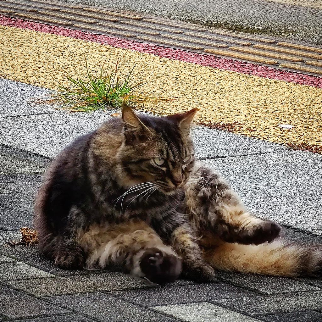 #猫好きさんと繋がりたい #猫好きさんとつながりたい #猫好き #猫写真 #猫 #ねこ https://t.co/iJf2LqtIX3