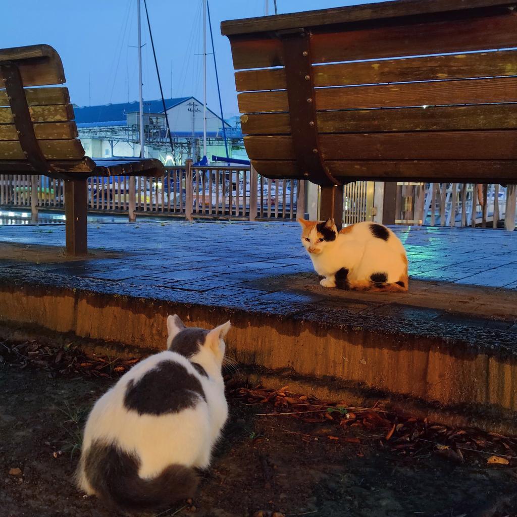 #猫好きさんと繋がりたい #猫好きさんとつながりたい #猫好き #猫写真 #猫 #ねこ https://t.co/LKi1FId9Pl
