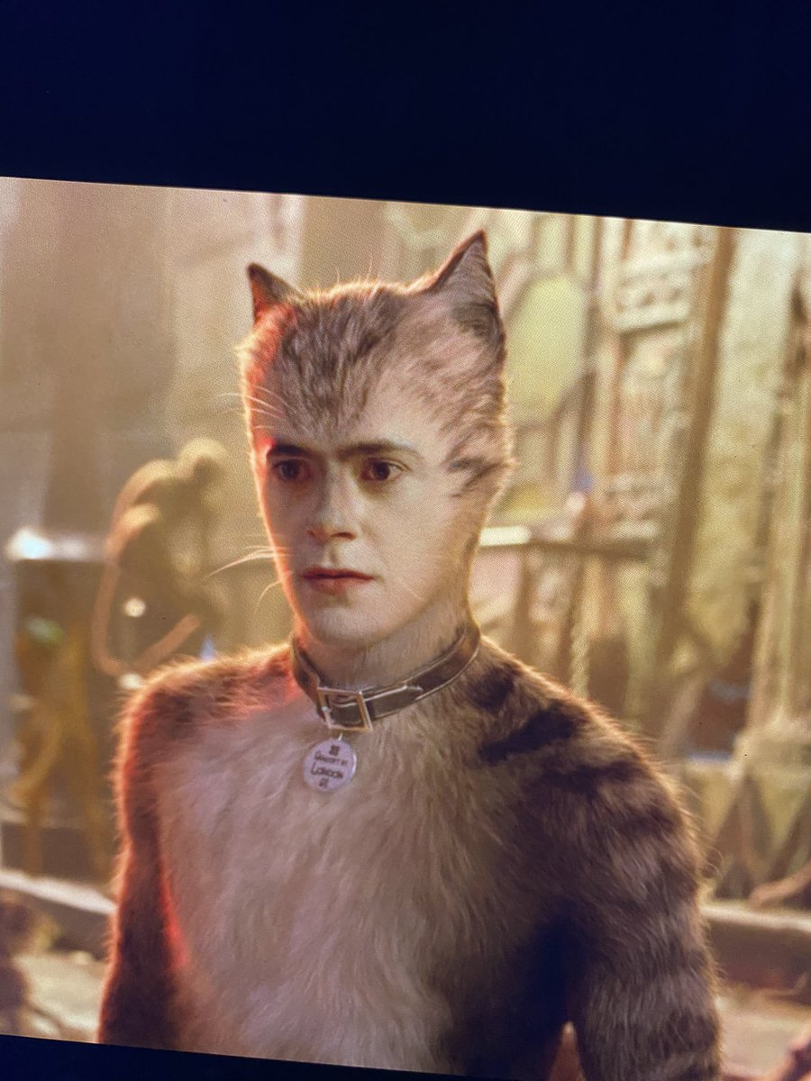 this cat really reminds me of young RDJ in civil war https://t.co/RtFsELiHAL