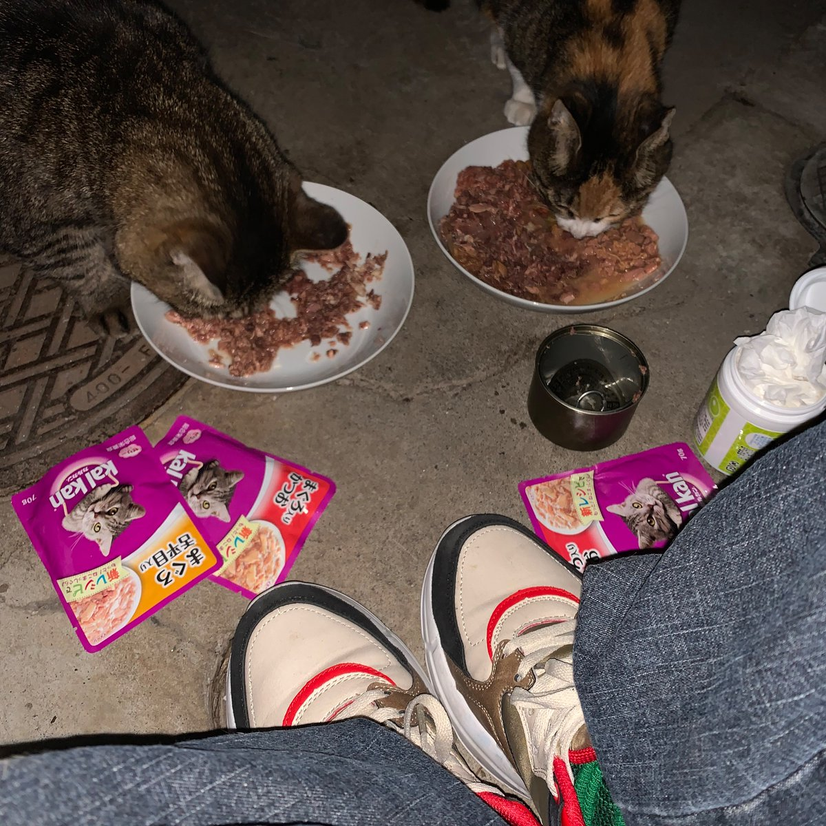 連休2日目アメネコ参上♡東京雨堪え涼しくちょうどイイ◎ミィとコモは食欲あって今夜も元気◎160gの魚正缶と70gのカルカン6P&20gのモンプチ「カリ×2」を ふたりで食べ終え満腹に♡bokuはこれから 帰宅しシャワー  録画ずみ相撲観戦! #猫 #キジトラ #サビ猫 #地域猫 #猫写真 #シンガーソングライター https://t.co/cveX0Rwsn3