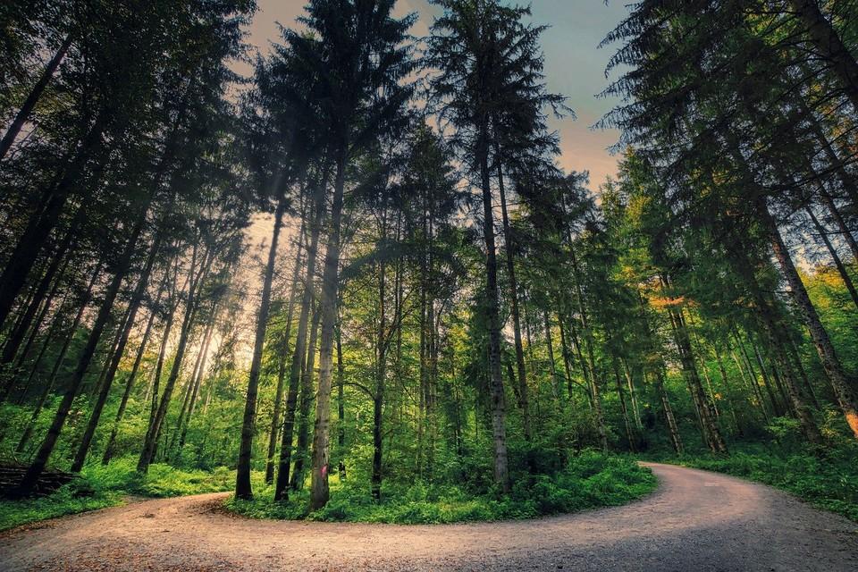 Si no estamos en paz con nosotros mismos, no podemos guiar a otros en la búsqueda de su propia paz (Confucio) Al igual que un ciego no puede guiar a otro ciego #paz #podemos #poder #tree #forest #nature #woodland  #confucio #frases9688 https://t.co/xRVKe9QrtH