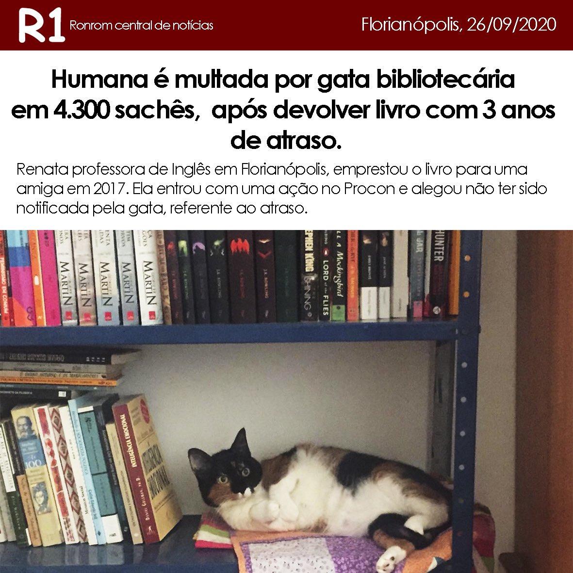 Gatinha Bibliotecária multa humana em 4.300 sachês na tarde deste sábado em #florianopolis 😱😹  #brincadeira #memesbrasil #gatos #adoção #instacat #gatosdotwitter https://t.co/3M3XBeqVIQ
