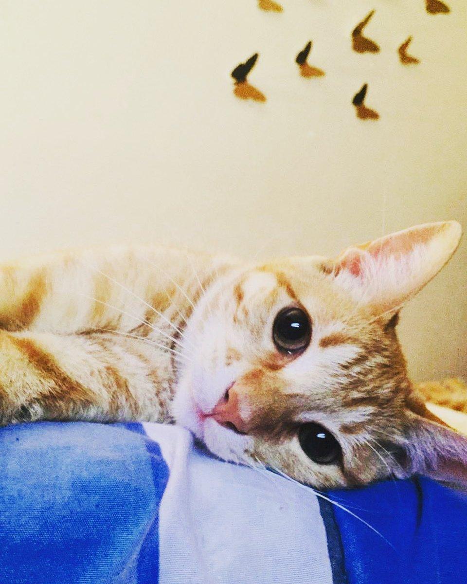 Quédate en casa, practica el distanciamiento social, límpiate constantemente. ¡¡Me estoy convirtiendo en mi güero!!  #instacat #instacatsgram #cat #catsofinstagram #cats https://t.co/aelwdboQU7