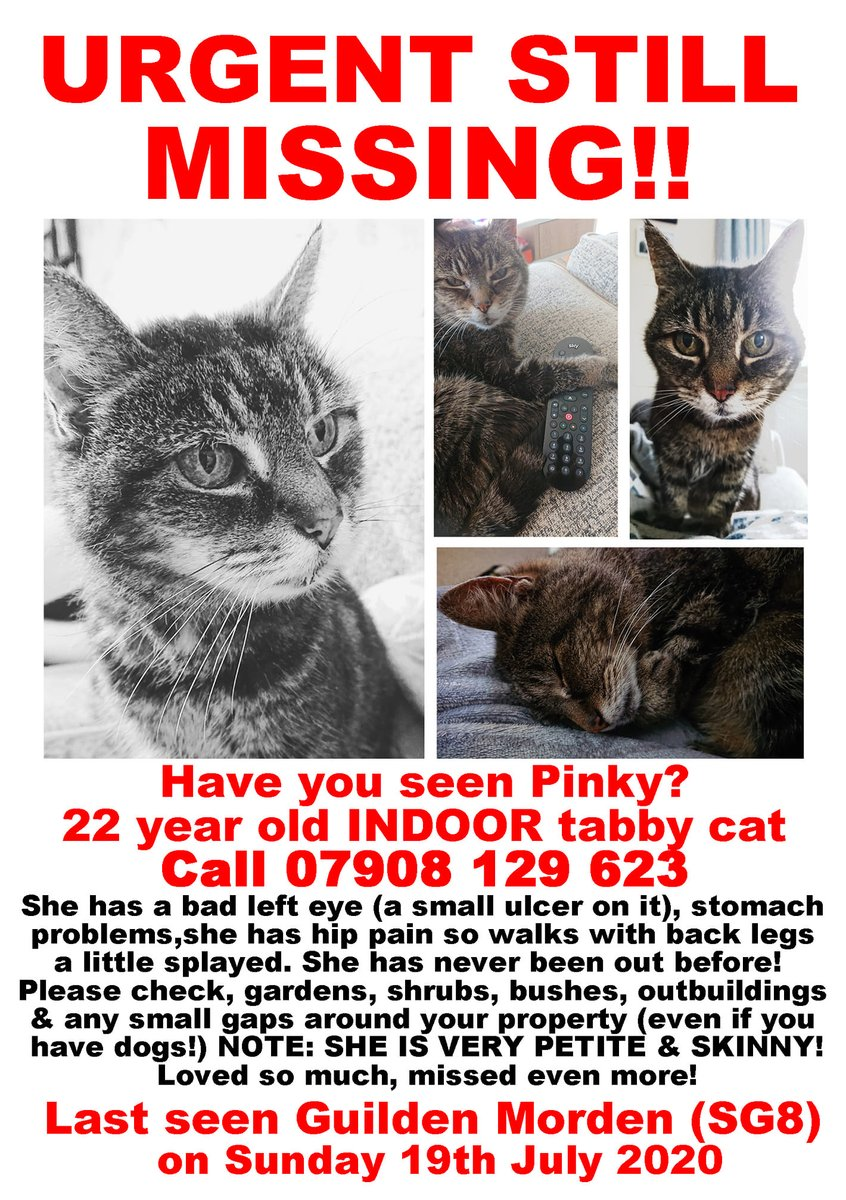 #Pinky is still #missing from #GuildenMorden #Stevenage #SG8 area, since 19/7/20. She is 22 years old & has never been out before. All information on poster. https://t.co/fxSlmF0eqg #Caturday #LostCat #TabbyCat #Lost #IndoorCat https://t.co/YejPKWOu2s