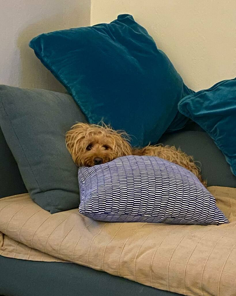 You comfy there Seren 🧡 #funnypup #saturdayvibes #dogsandlove #welshpuppy #seren #star #makesmelaugh https://t.co/LRTkiwlP0t https://t.co/WYSRLi8mHS