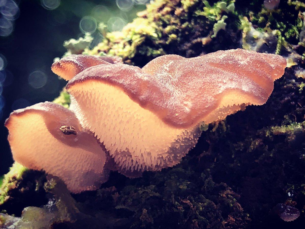 Autumn stroll #autumn #autumnlight #mushrooms #fungi #fungus #woodlandfloor #woodland #woods #forest #trees #nature #goodforthesoul #NaturePhotography #forestphotography #photography #windermere #LakeDistrict #Cumbria https://t.co/OwmqMLyfNd