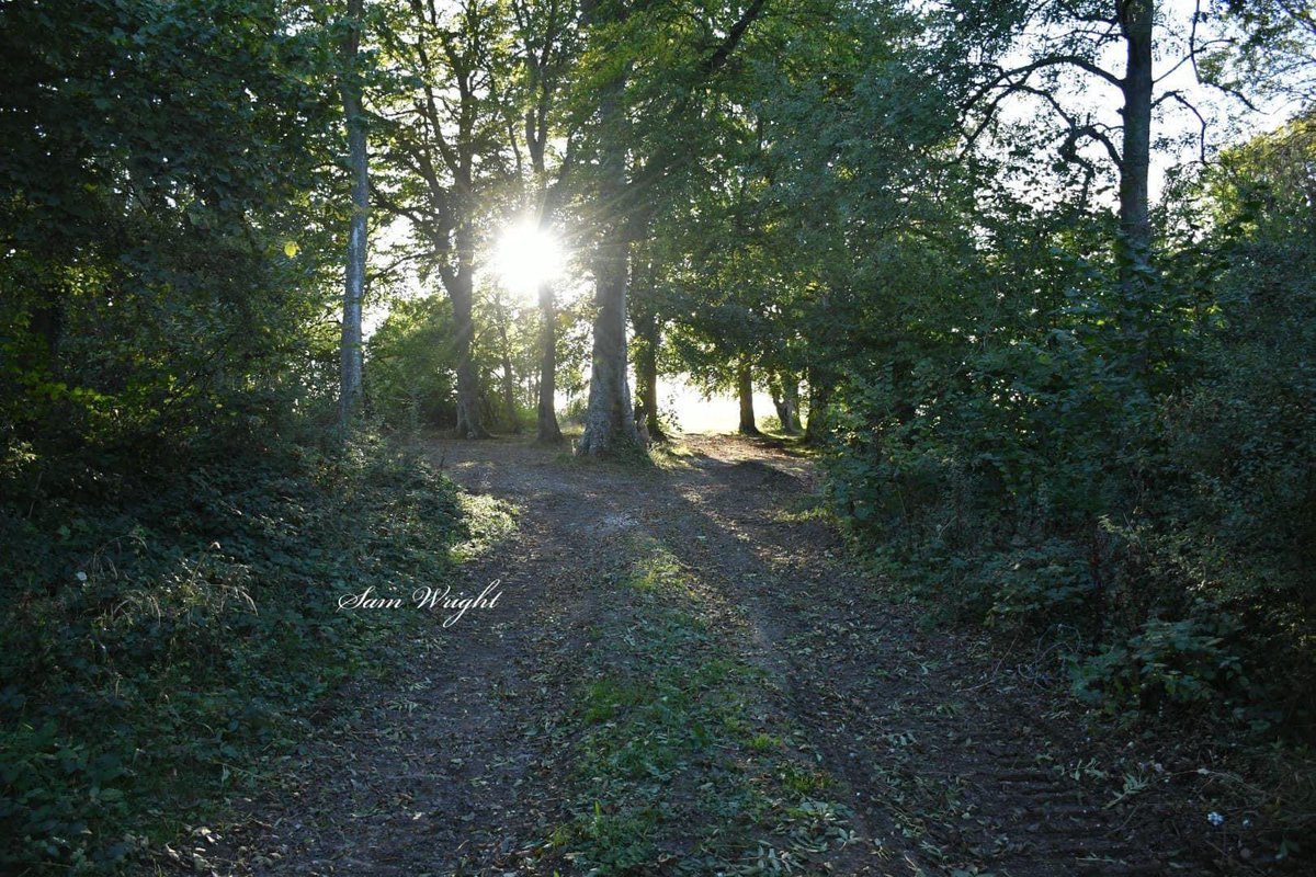 Nice walk in the woodlands #woodland #nikonphotography #photography #photographylover #wildlife #countryside #trees #leavesfalling #autumnfalls https://t.co/oIUJg5TONj