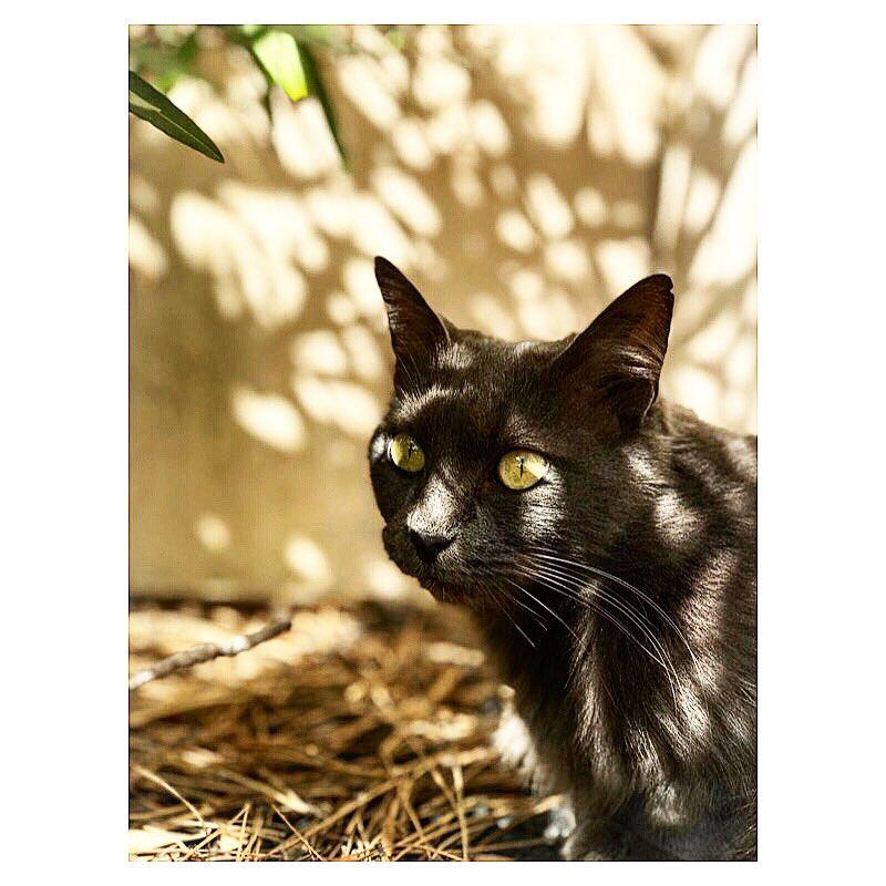 |HAIIRO| #catsofinstagram  Jardiner par jour de mistral c'est bien,  Jouer à chat perché aussi ! #haiiro #gris #chatstagram #cat #catstagram #catstagram #petsofinstagram #igersfrance #igersaixenprovence #puyricard #shadow #shadowhunters #gardenvisitor #inmygarden #picoftheday https://t.co/sd9jarfyWf