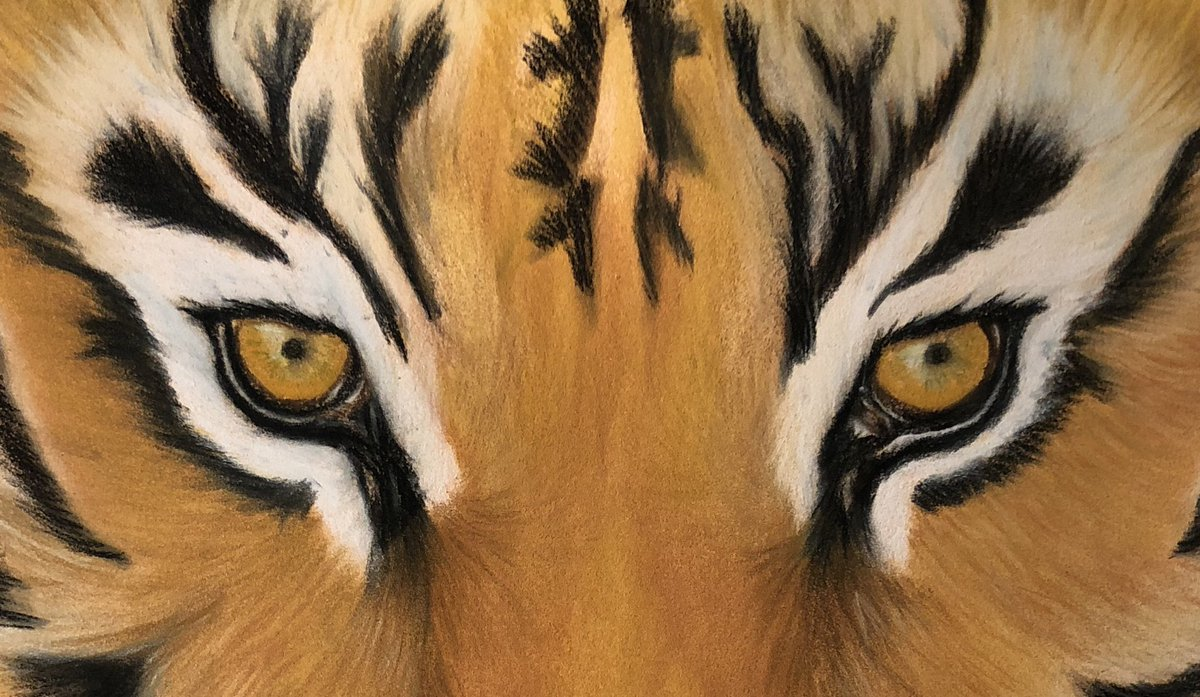 #WIP #Tigers https://t.co/7cq5k51JWU