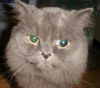 先代猫の闇ちゃん。 #猫好きさんと繋がりたい #猫写真 #猫好きな人と繋がりたい #猫画像 #猫好き #猫のいる暮らし #ねこ #cat #cats #catstagram #catlover https://t.co/yXfiDq4SQ0