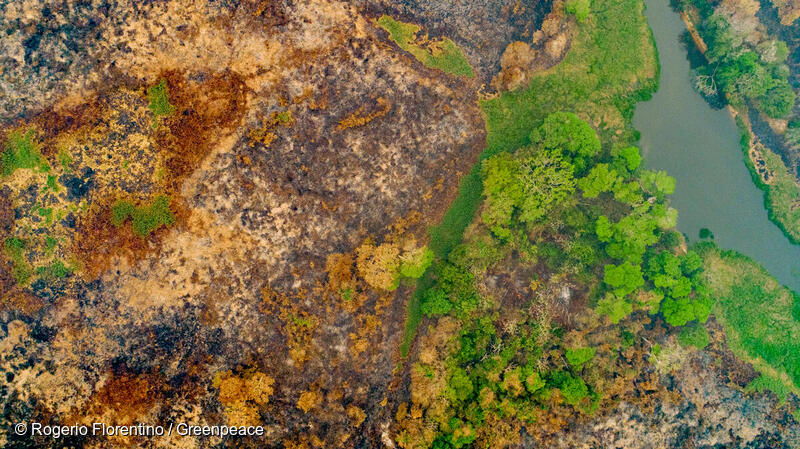 2.3 million hectares of the #Pantanal wetlands in Brazil, home to unique biodiversity, such as the spotted jaguar, have been burned this year. We can't allow Bolsonaro to continue putting greed ahead of the climate, biodiversity and Indigenous Peoples' lives. https://t.co/i1NNa8MEmR
