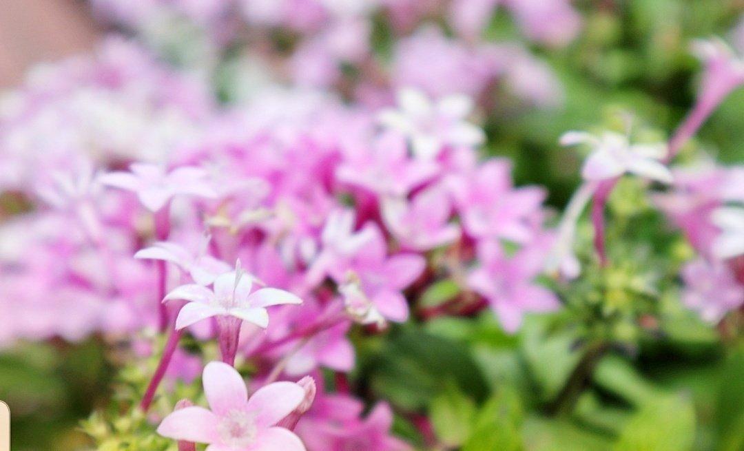 おはようございます🌄  優しい繋がり #ありがとう  みんなのツイート 写真、メッセージに癒されてます🤗💟  心がほっこりします☺️  #日曜日 幸せ舞い込みますよーに😌🌸💓  #淡い色のお花 ふんわり🌺🌺 https://t.co/ldBV5udj82