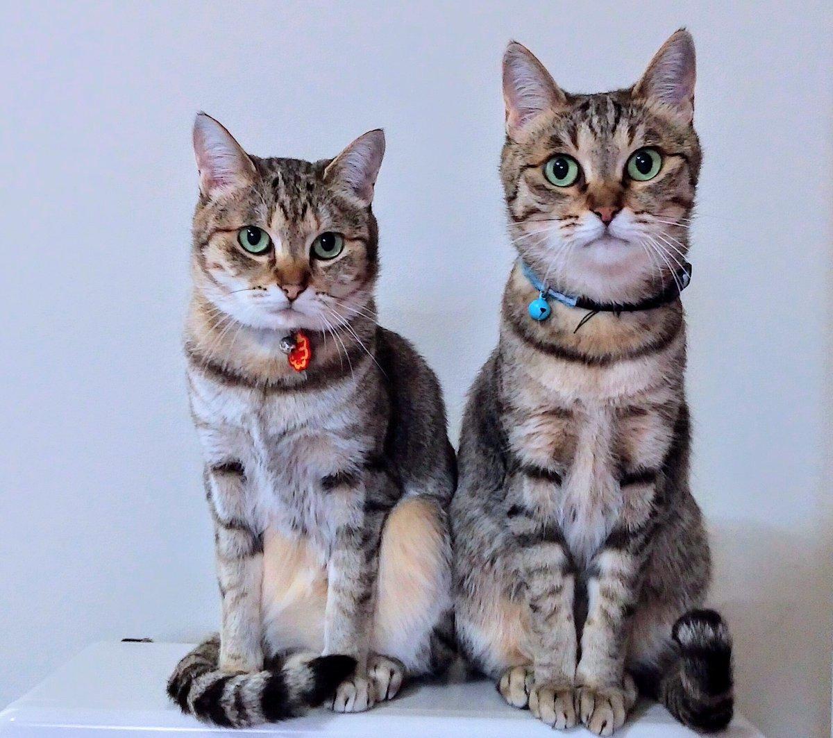 うちの猫 可愛くない? #猫 #猫との暮らし #猫バカ #猫がいる生活 #猫の多頭飼い #家猫 #愛猫 #猫好きさんと繋がりたい #猫すたぐらむ #猫のいる暮らし #猫写真 #猫と暮らす家 #姉妹猫 #cat #catstagram #cats🐱 #北海道 #北海道の猫 #アラフィフ #Instagram #まとめ https://t.co/J9led6whEo https://t.co/M7RjDngiPd