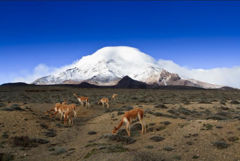 ¡Ecuador nos presenta paisajes ideales para componer las mejores postales a través de la fotografía! Revisa las áreas protegidas que están habilitadas para el turismo y toma las mejores fotos con tus amigos:  https://t.co/r5LmFVcPTH  #VisitEcuador #Senderismo #Naturaleza https://t.co/14x2OOUtMW