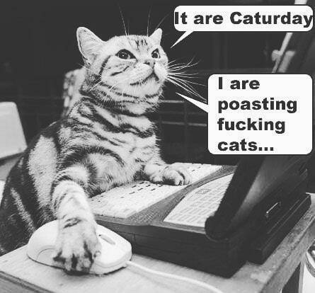 Happy #caturday errbody  Check out Operation Caturday tonight at 8pm pacific!  Info at https://t.co/z4epYESBES  #podecho #podernfamily #internetradio #radio #PodcastHQ #SupportSmallStreamers #sanjose https://t.co/O7fO4stNtn https://t.co/VmgUJUgOIh