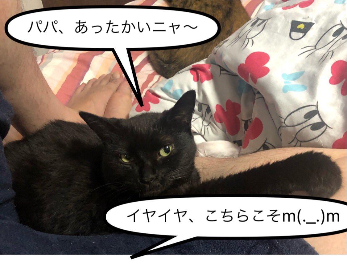 朝は涼しくなってきました・・・つか寒い? #ネコ #猫 #猫バカ #ねこらぶ #ねこと暮らす #ねこすたぐらむ #ネコ好きさんと繋がりたい #ねこ動画 #猫写真 #ネコバカ #ネコ好き #保護ネコ #仔猫 #サバトラ #キジトラ #黒猫 #キジ猫 #サビ猫 #白トラ #三毛猫 #ボーカロイド #VOCALOID #オリジナル曲 https://t.co/SzuNFppoQe
