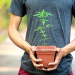Image for the Tweet beginning: #cannabis #weed #marijuana Jimmy Carter