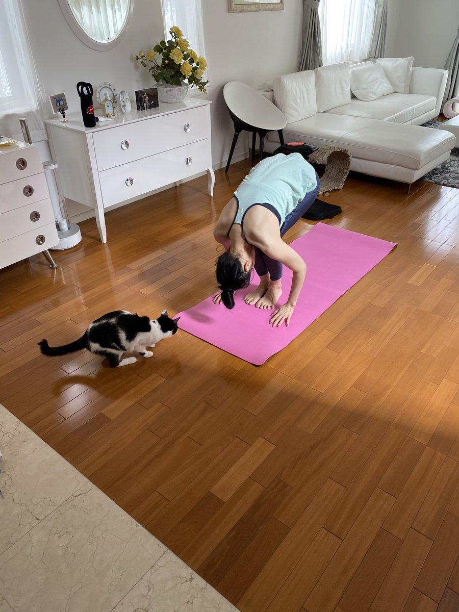 「はいもっとまるまって!わたしみたいにもっと猫背に!」#ニャンストラクター