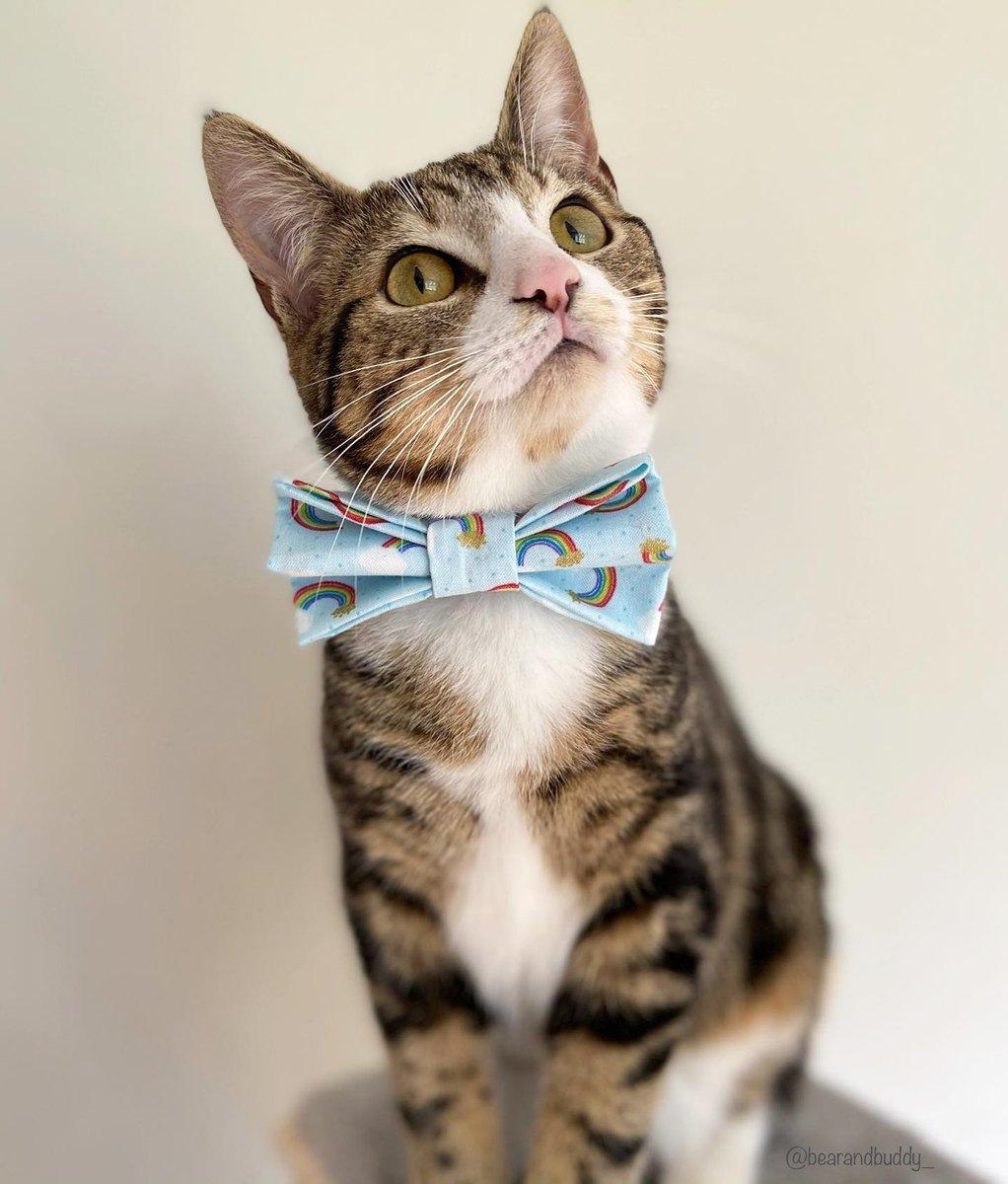 🐱 Happy Sunday from Buddy, Hope you have a lovely day!  📷 @bearandbuddy_  #petclubsa #meowed #cat #catsofinstagram #kitten #kitty #tabbycat #tabby #tabbycatsofinstagram #tabbiesofinstagram #tabbies #tabbiesofig  📍 Northern Ireland https://t.co/mUVDQVAUF8