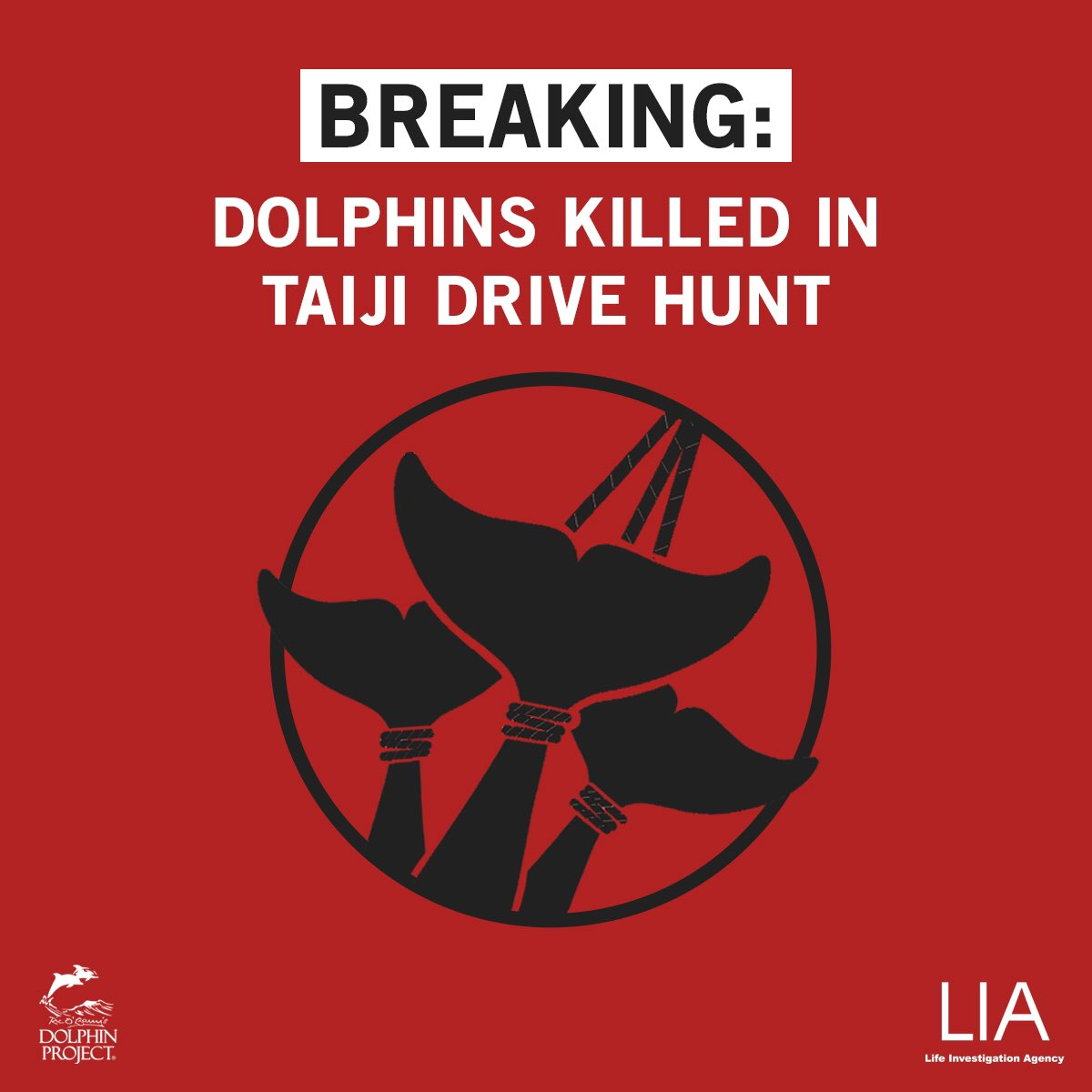 Taiji: The dolphin hunters have slaughtered a pod of Risso's Dolphins. We will update with a count. September 27, 2020 11:30am Coverage in collaboration with #LifeInvestigationAgency and #DolphinProject https://t.co/ZiqNXxZ8Jb