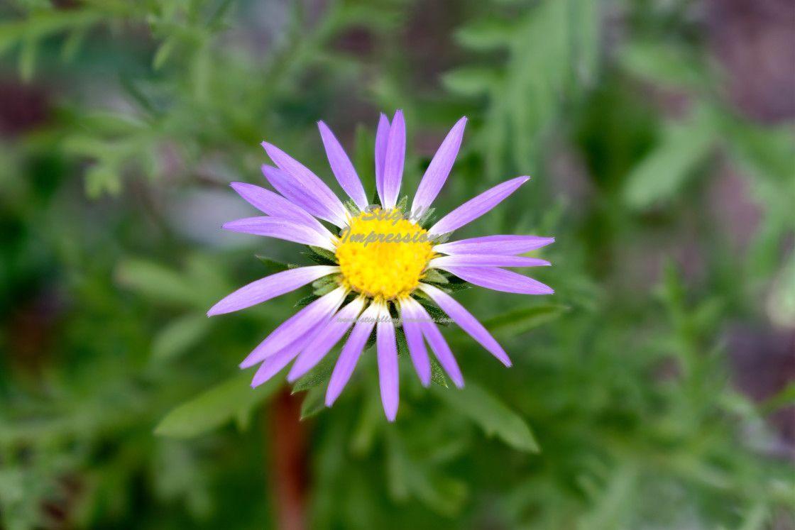 Purple Wildflower. #photography #nature #naturephotography #flowers #wildflower https://t.co/TpIePHlO08