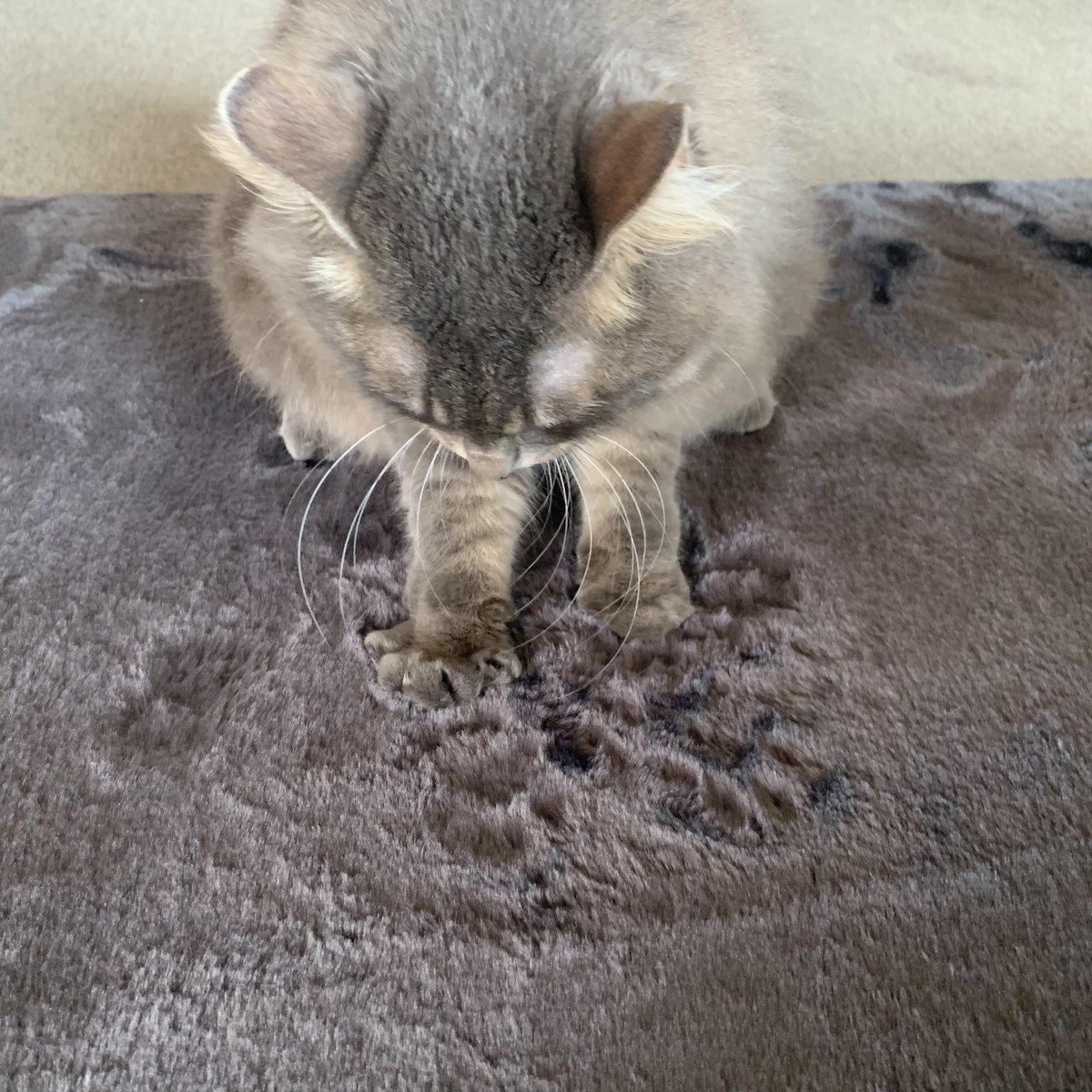 ふかふかのカーペットにしたらカーペットで職人芸披露してくれるようになったんだけど跡がつく かわいい