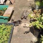 カメに追いかけられているうちに、池に落ちてしまった子猫!
